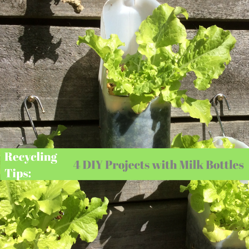 Recycling Tips. DIY Projects with Milk Bottles