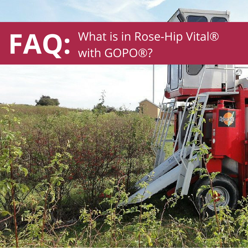 FAQ: What is in Rose-Hip Vital?